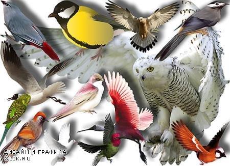 Клипарты без фона - Птицы