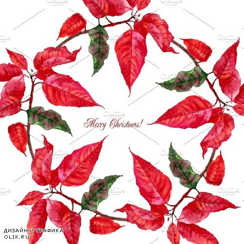 Christmas Poinsettia - 466283