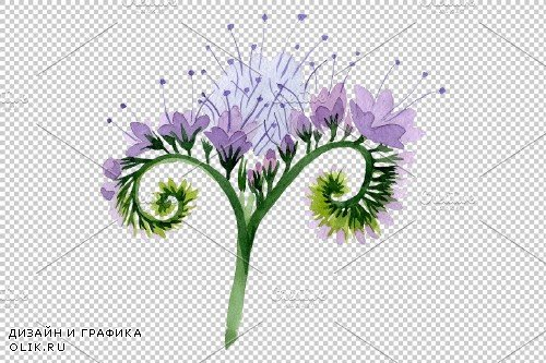 Phacelia Watercolor png - 3778854