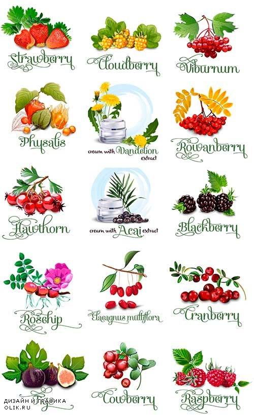 Ягоды - Векторный клипарт / Berries - Vector Graphics