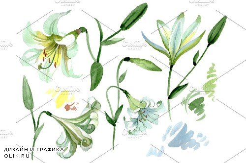 White lilies Watercolor png - 3780089