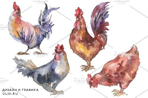 Agriculture: cock,hen Watercolor png - 3784064