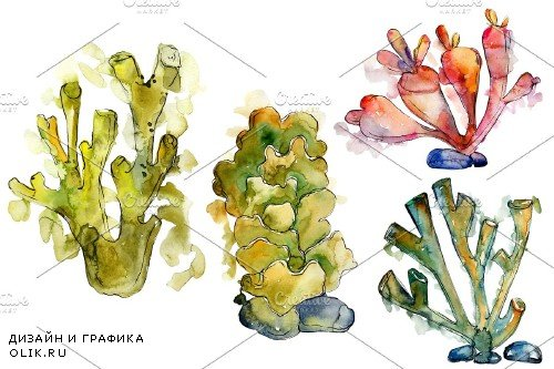 Corals Seafood Watercolor png - 3788981