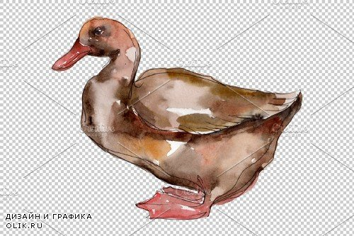 Farm animals: ducks Watercolor png - 3785552