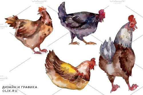 Farm animals:hen Watercolor png - 3785448