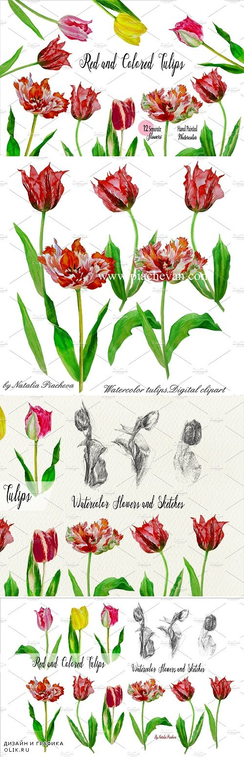 Red Tulips. Watercolor Clip Art - 523604