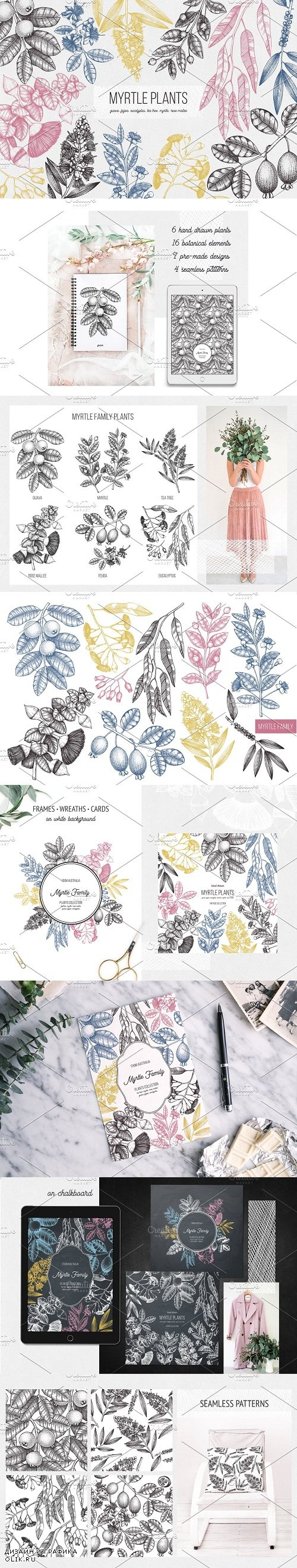 Myrtle Plants Collection - 2799313