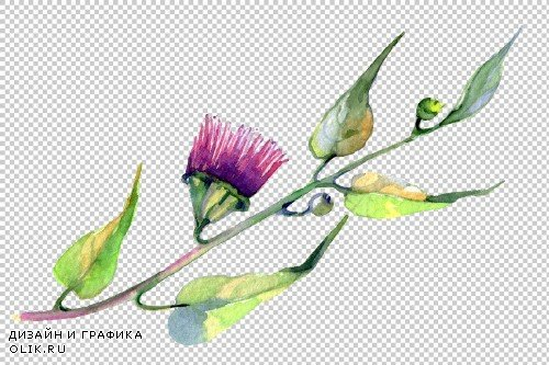 Eucalyptus watercolor plant png - 3798911