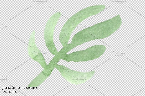 Flowers ranunculus watercolor png - 3808355