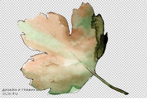 Gooseberry PNG watercolor plant set - 3095230