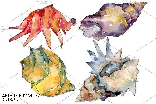 Shells Watercolor png - 3819299