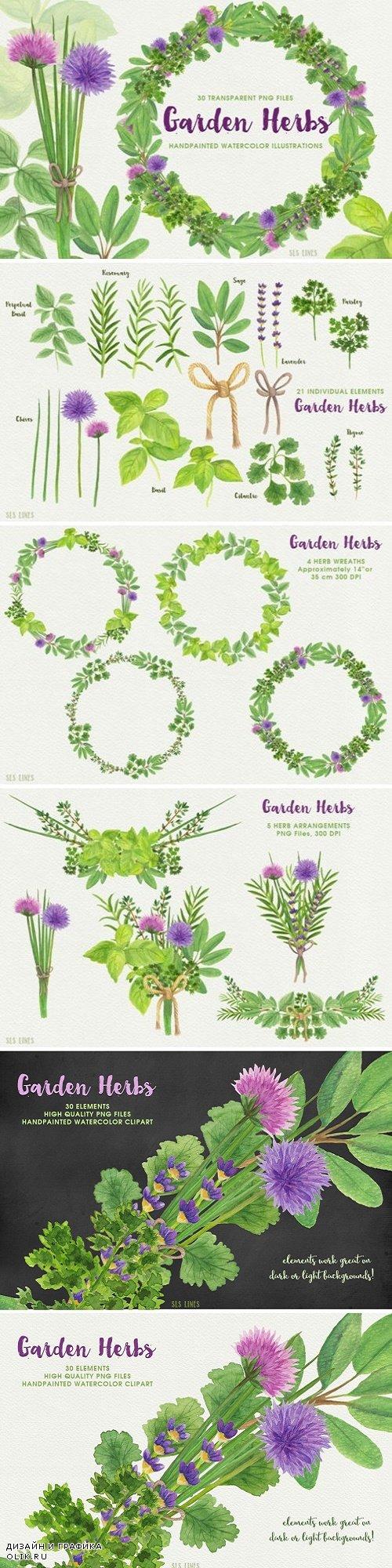 Herb Garden Watercolor Illustrations - 1552811