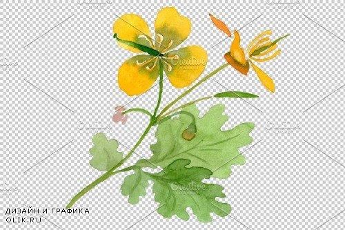 Herbals Watercolor png - 3819624