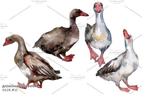 Farm animals: geese Watercolor png - 3836189