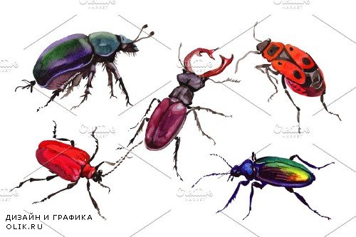 May beetle ordinary watercolor png - 3837345