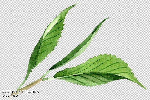 Tea leaf PNG watercolor set - 3102999