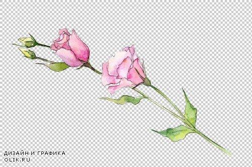 Delicate eustoma flower PNG set - 3100071