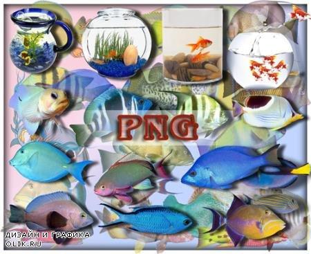 Растровые клипарты - Рыбы океанов