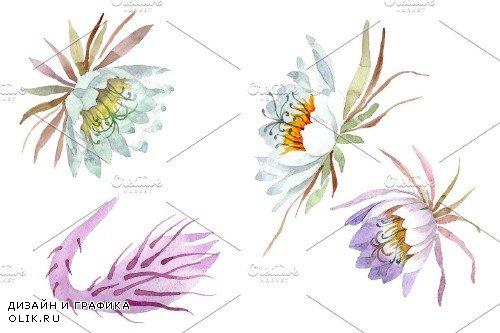Kadupul watercolor png - 3842807