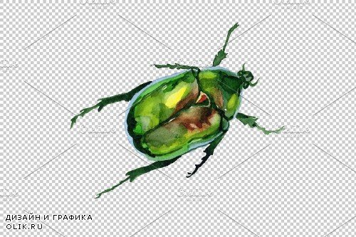 May beetle aurata watercolor png - 3839152