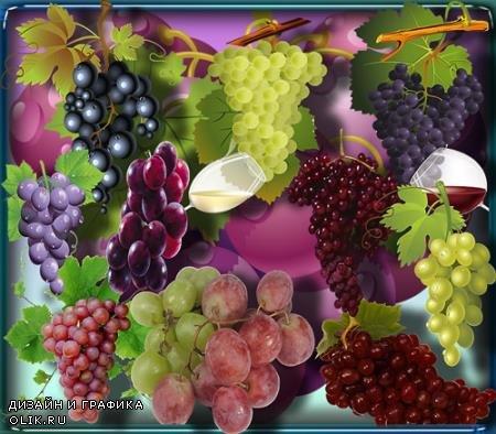 Растровые клипарты - Спелый виноград