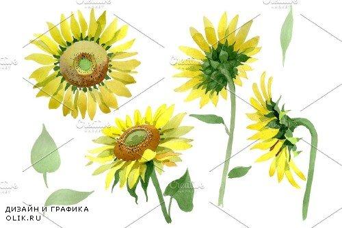 Bright yellow sunflower watercolor - 3851139
