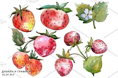 Strawberry Queen Elizabeth watercor - 3865113