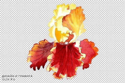 Iris plant Bold encounter watercolor - 3865146