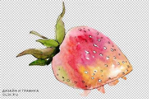 "Strawberry ""Gigantella"" watercolor - 3864825"