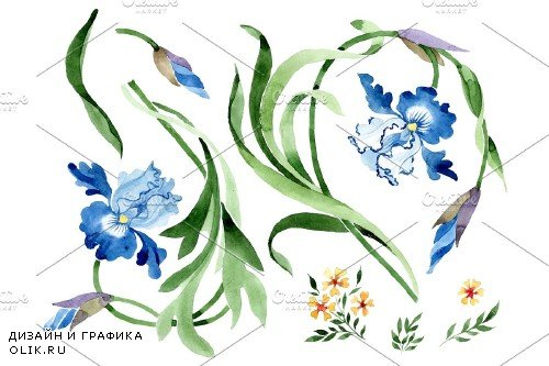 Ornament with irises Watercolor png - 3869905