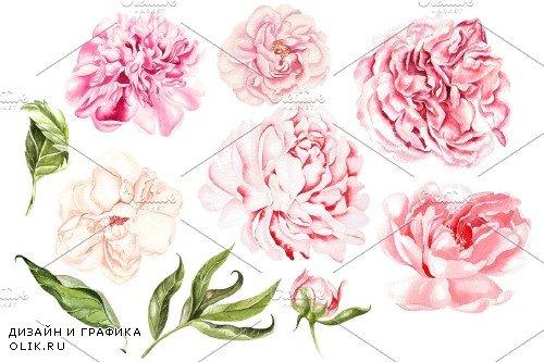 Watercolor Blooming Peony&Hudrangea - 3868446
