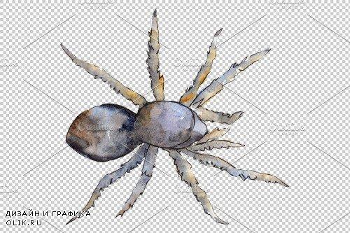 Tarantula Watercolor png - 3883324