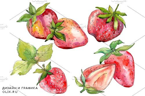 "Strawberry ""Alba"" watercolor png - 3886170"