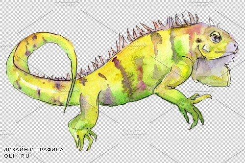 Animal iguaana watercolor png - 3883205