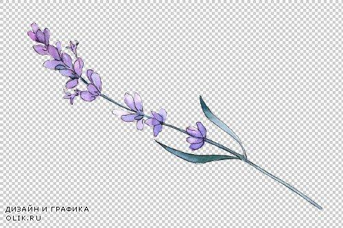 Plant lavender watercolor png - 3884828