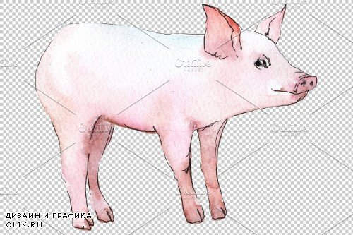 Animal pig watercolor png - 3884659