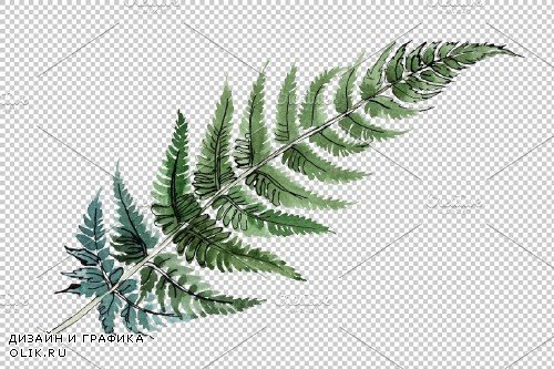 Fern plant watercolor png - 3884647