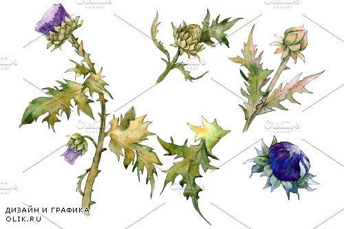 Watercolor thistle png - 3884625