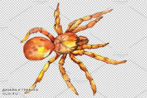Animal World tarantula watercolor - 3883407