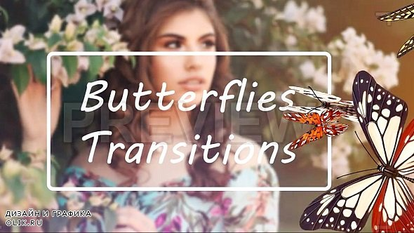 Butterflies Transitions 227558 - Stock Motion Graphics