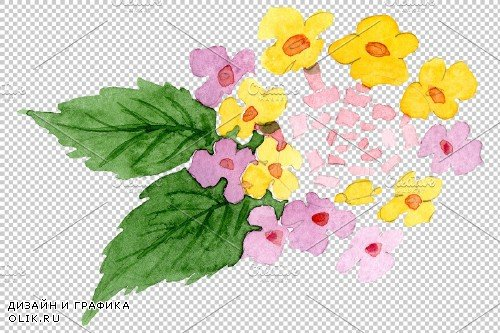 Pink lantana watercolor png - 3891064