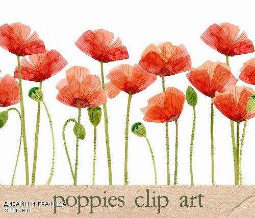 Watercolor Flowers, Poppies - 15954
