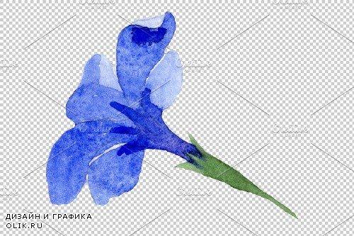 Phlox blue watercolor png - 3897433