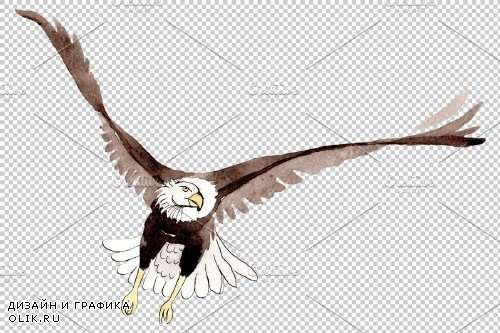 American bald eagle Watercolor png - 3899645