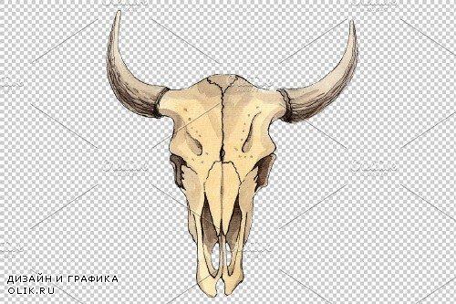 Cow skull watercolor png - 3899548