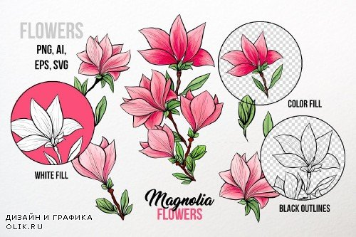 Magnolia Flowers Hand-drawn Art - 3864717