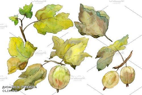 Gooseberry plain watercolor png - 3899475