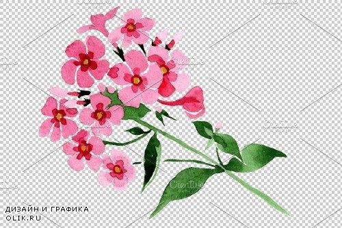 Phlox pink watercolor png - 3897668