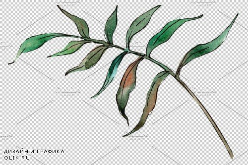 Tropical plants Watercolor png - 3899219