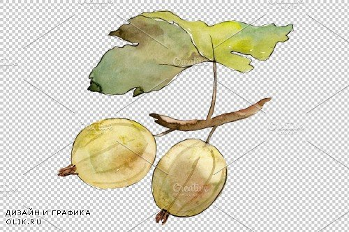 Gooseberry plain watercolor png - 3899475